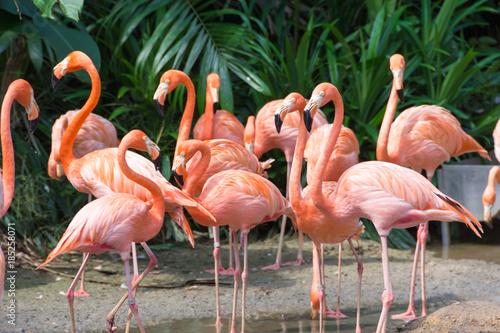 Garden Poster Flamingo flock of pink flamingos in a zoo