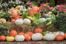Pumpkins And Gourds And Vegetables With Flowers On Display. Organic Farm Concept.