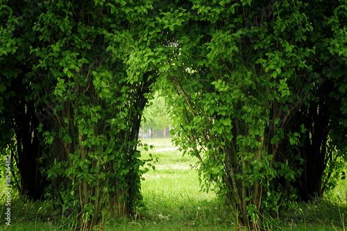 nice hedge end