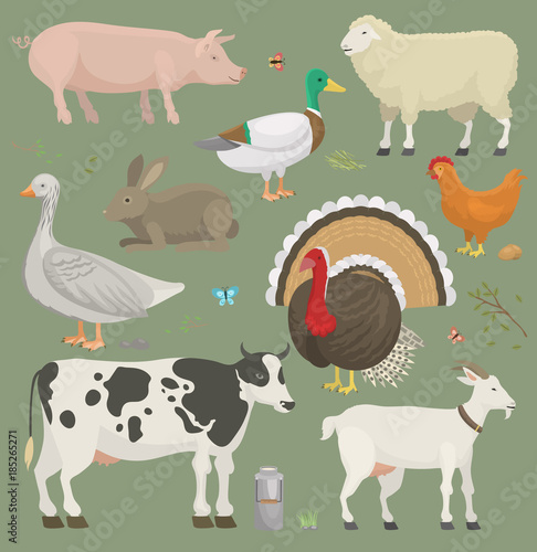 Different home farm vector animals and birds like cow, sheep, pig, duck farmland set illustration #185265271