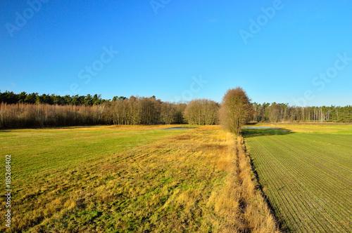 Foto op Aluminium Blauw Pole i las oświetlone w dzień jesiennym słońcem.