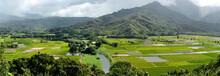 Taro Farms - Panoramic View Of...