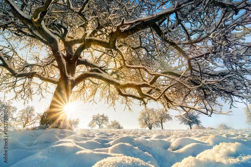 Papiers peints Beige Winter Landschaft mit der Sonne hinter einem schönem Baum