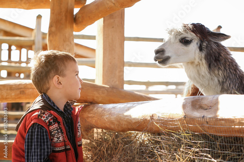 Poster Lama Little boy with alpaca in zoological garden