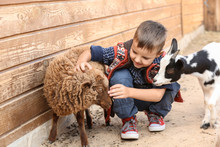 Cute Little Boy With Sheep In Petting Zoo