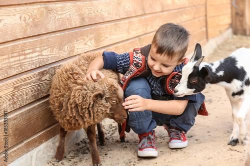 Obraz Cute little boy with sheep in petting zoo - fototapety do salonu