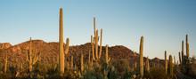 Saguaro National Park Desert S...