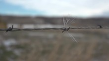 Deer Hair On Barbed Wire