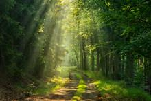 Wanderweg Durch Grünen Wald, Sonnenstrahlen Durch Morgennebel