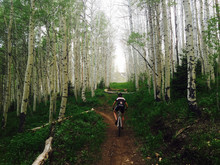Man Rides Single Track Through Aspen Grove