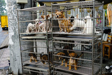 Puppies In Cage For Sale