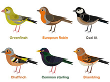 Vector Illustration Set Of Cute European Bird Cartoons - Greenfinch, Robin, Coal Tit, Chaffinch, Common Starling, Brambling