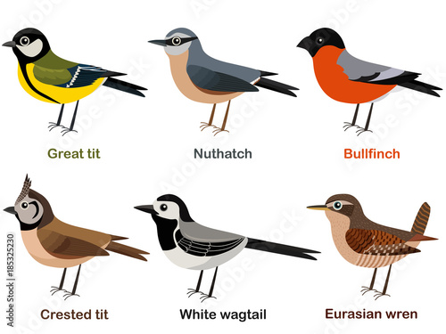 Fotografie, Obraz  Vector illustration set of cute European bird cartoons - Great tit, Nuthatch, Bu