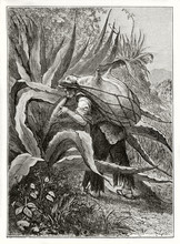 Old Illustration Of Mexican Pe...