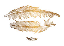 Hand Drawn Feathers Set On Whi...