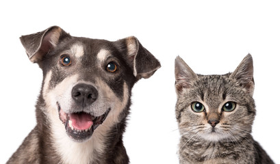 FototapetaCat and dog together isolated on white
