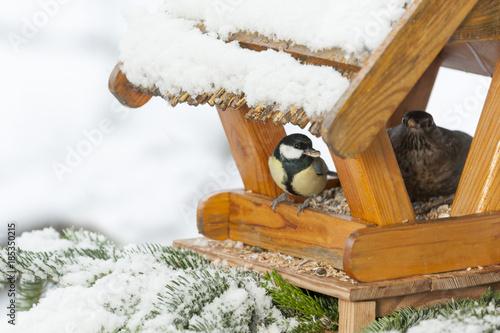 Fotomural  Winterfütterung an einem Vogelhaus, Kohlmeise, Amsel.