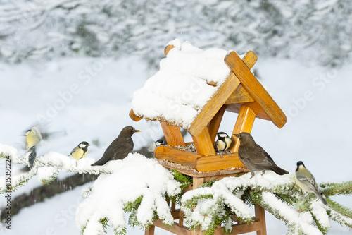 Winterfütterung an einem Vogelhaus, Meisen, Kohlmeisen, Amsel