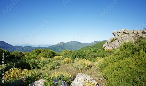 Slika na platnu plantes et flore méditerranéenne dans la montagne de Costa verde en haute Corse