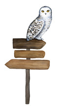 Wooden Sign And Snowy Owl Character Sitting On It. Hand Drawn Watercolour Illustration, Isolated, Cutout, White Background. Directional Information, Guidepost, Place For Text, Placard, Advice, Label.
