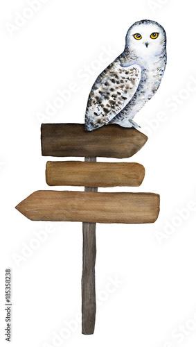 Drewniany znak i śnieżna sowa siedząca na nim postać. Ręcznie rysowane akwarela ilustracja na białym tle, wyłącznik, białe tło. Informacje kierunkowe, drogowskaz, miejsce na tekst, tabliczka, rada, etykieta.