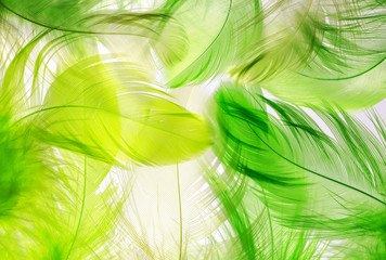 Fototapetathe background of the many beautiful natural feathers of different shapes of green and yellow
