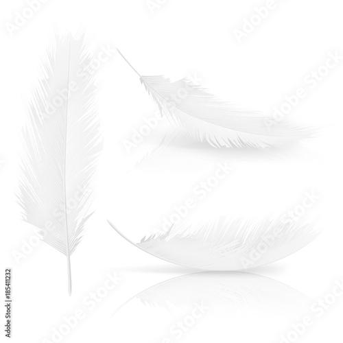 Zestaw realistycznych 3d białych piór ptaków. Symbol lekkości, niewinności, nadziei i nieba. Różnorodna kolekcja piór aniołów lub ptaków. Wektor na białym tle ilustracja na białym tle.