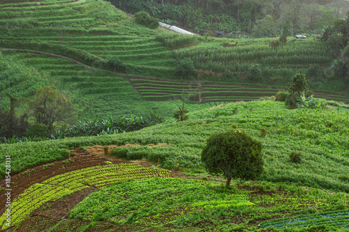 Staande foto Groene Vegetable farm at Mon Cham Hill, Chiang Mai, Thailand.