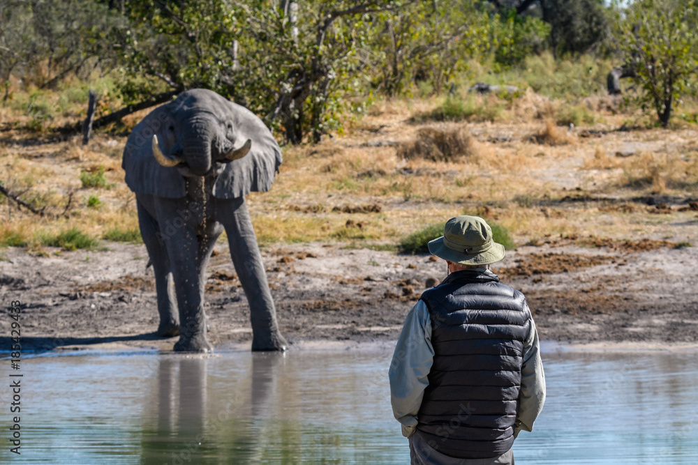 Elephant drinking at a water hole with a man watching, Botswana, Africa