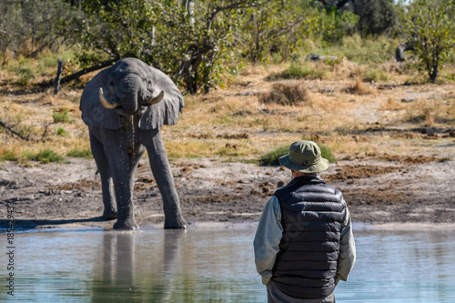Photo Elephant drinking at a water hole with a man watching, Botswana, Africa