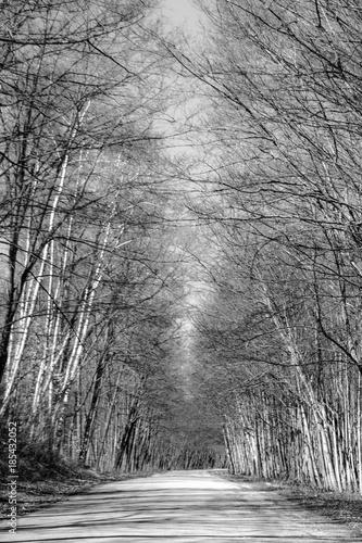 Fotografie, Obraz  Tree Cave