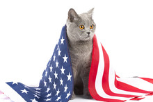 Cat With Flag Of USA