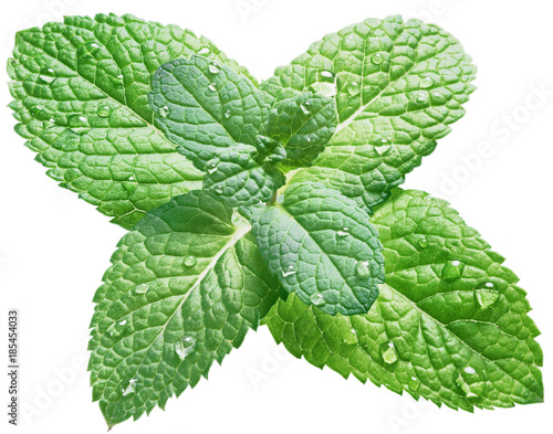 Spearmint or mint leaves with water drops on white background.