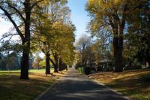 Road In Fitzroy Gardens In Mel...