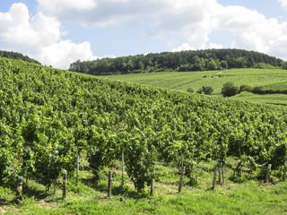 Fototapeta na wymiar Chablis, Burgundy, France - view of the vineyard just outside Chablis in the Cote d Or department in Burgundy in eastern France