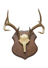Deer Trophy Antlers Isolated O...