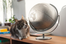 Cat Looking At An Earth Globe ...