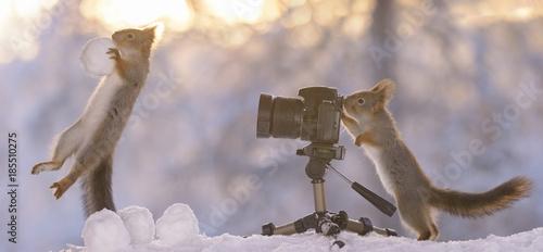 wiewiorki-z-sniezka-i-aparatem