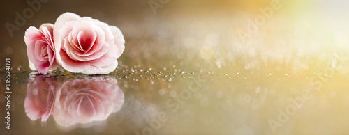 Fototapeta Valentine's day greeting card with soft pink rose flower obraz