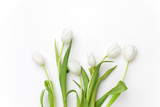 Fototapeta Tulipany - White Tulips on white background. Top view