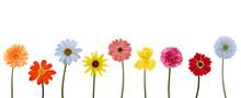 Set Of Blooming Variety Flowers