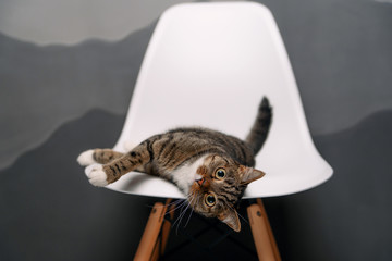 Funny home cat with big yellow eyes lies on a white chair indoor.