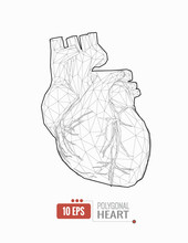Low Poly Human Heart Wireframe...