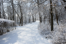 Snowy Driveway Through Woods