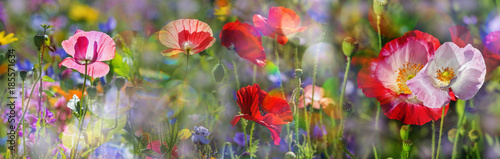 Foto op Canvas Poppy summer meadow with red poppies