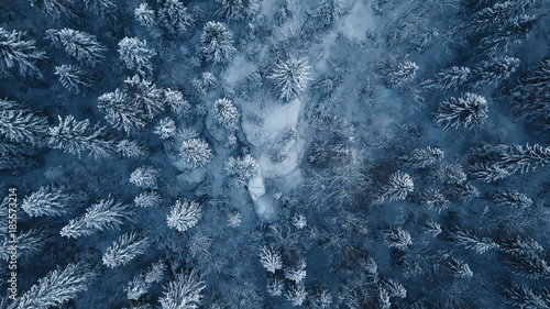 Foto op Plexiglas Nachtblauw Drone photo of snow covered evergreen trees after a winter blizzard in Lithuania.