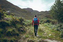 Male Hiker Walking Through Gre...