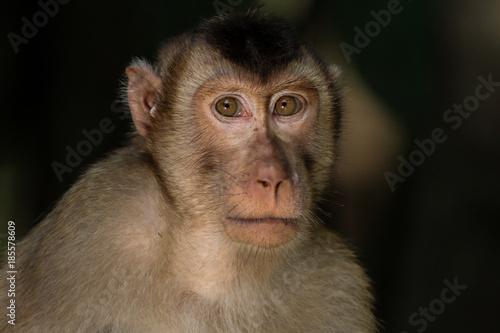 In de dag Macaco
