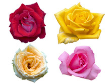Four Color Of Rose Flowers Iso...
