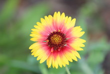 Yellow And Red Indian Blanket ...